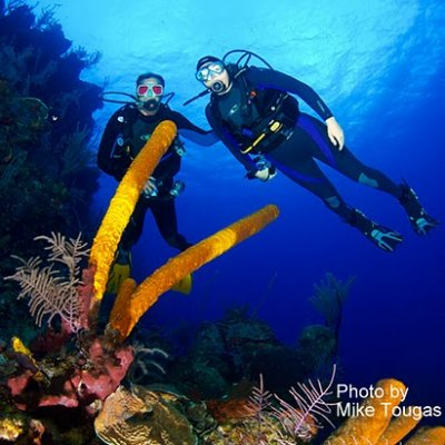 Dive the World\'s Second Largest Barrier Reef