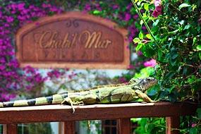 Iguana at Chabil Mar
