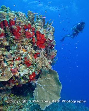 Diving the Belize Barrier Reef