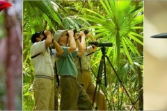 Birding Vacations in Belize