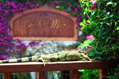 Chabil Mar's Extraordinary Tropical Gardens and Landscaping