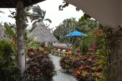 The beautiful lush gardens surrounding the Palapa Lounge and Grills